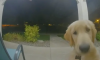 Dog rings doorbell
