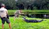 Florida Gator Attacks Man Frisbee