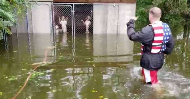 Thank God For These People Rescuing Dogs That Were Left to Drown