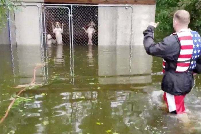 Watch These Abandoned Dogs Get Rescued From Hurricane Florence