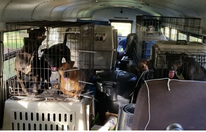 Driver Rescues 64 Animals From Hurricane Florence Floods Using 'Noah's Ark'