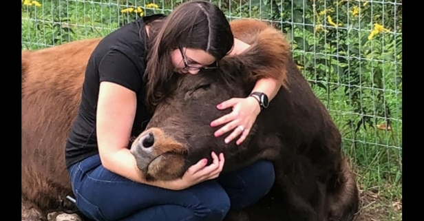 Cow Cuddling is the Best Wellness Trend