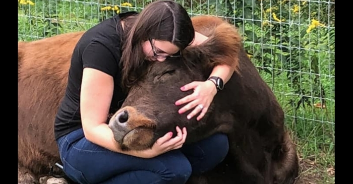 Cow Cuddling is the Newest Wellness Trend