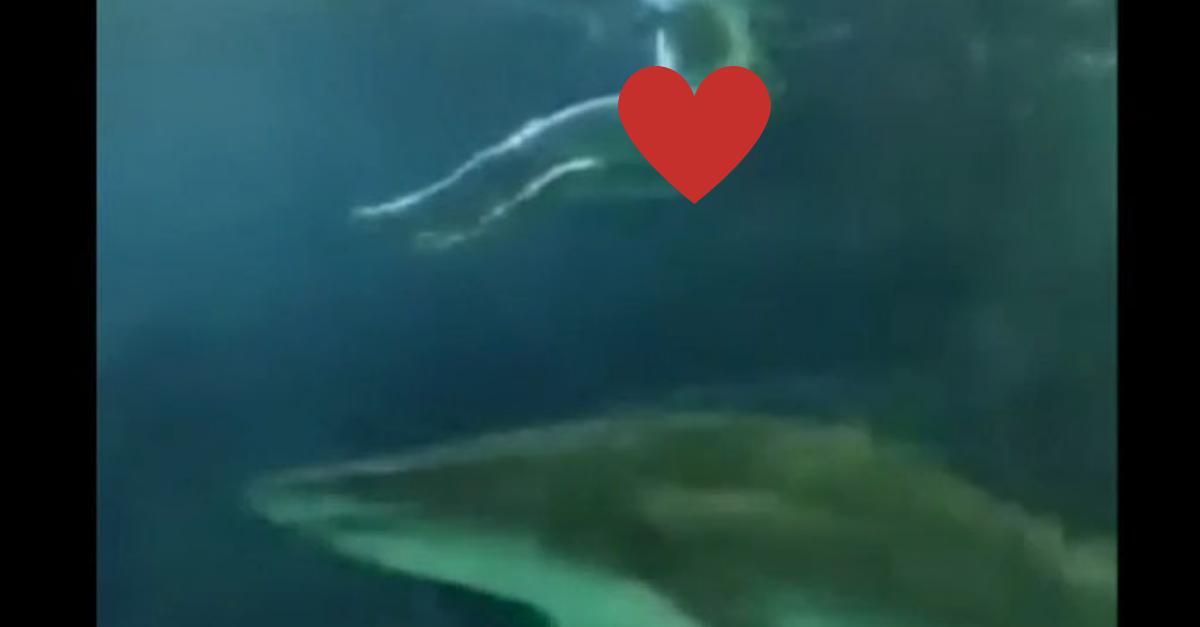 Naked Man Shark Tank