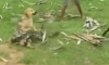 Snake Attacks Dog
