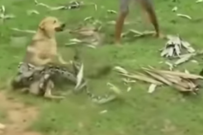 Video Shows Heroic Boys Save Their Dog From the Grip of Giant Snake