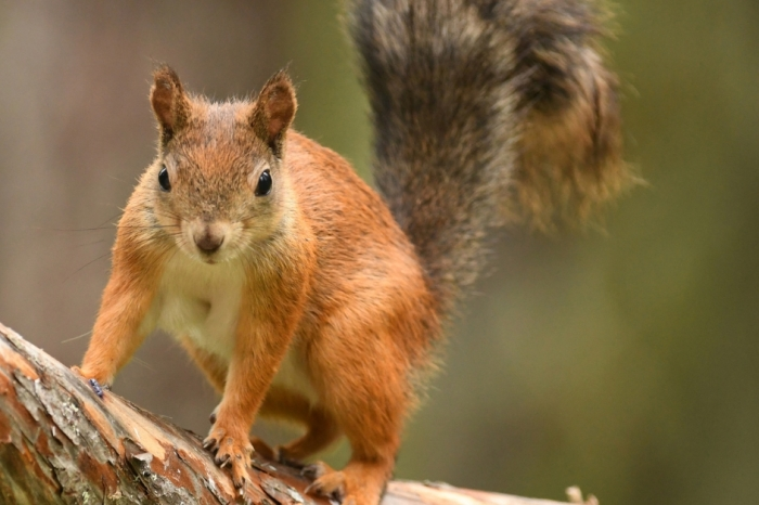 Woman Tries to Bring Emotional Support Squirrel on Plane and Delays Flight
