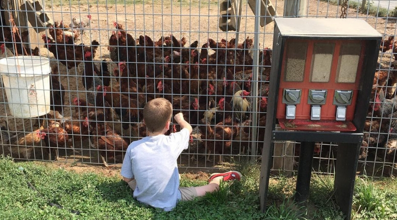 Yes, Therapy Chickens Are Actually A Thing And We're Shocked