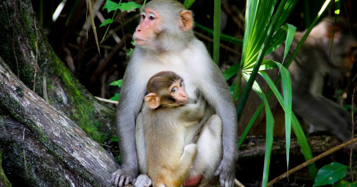 Florida Monkeys