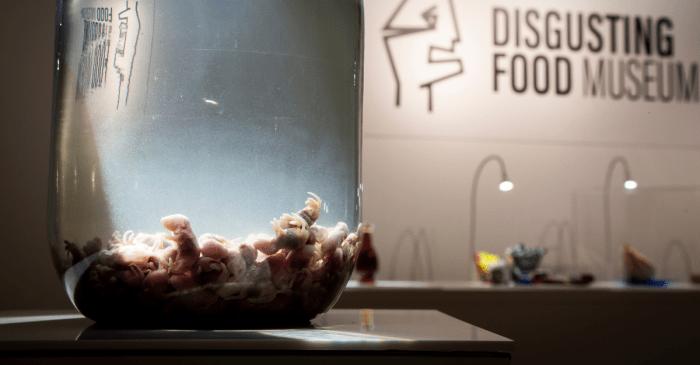 Gag! Rotting fish, maggots on menu at Disgusting Food Museum
