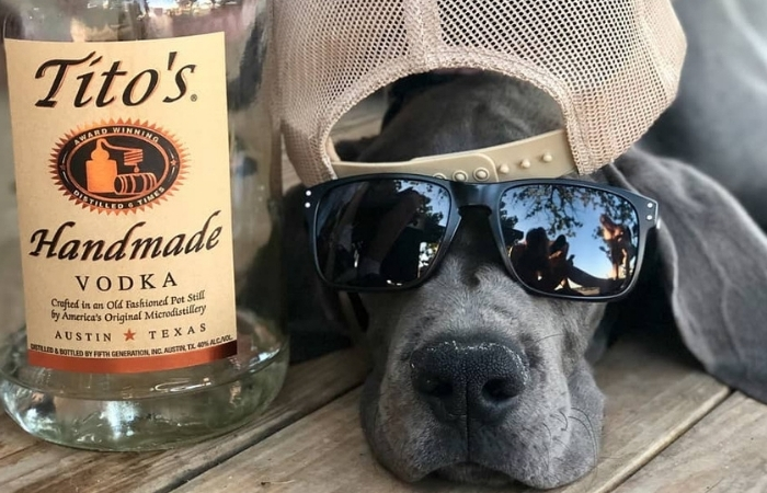 Austin Celebrates First Ever 'Dog Restaurant Week'