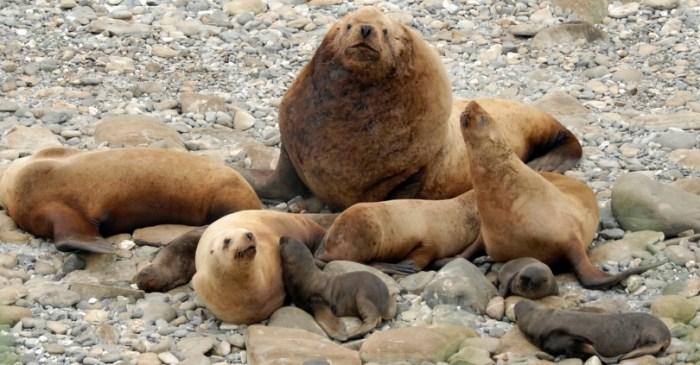 Alaska Fishermen Sentenced For Killing Endangered Sea Lions