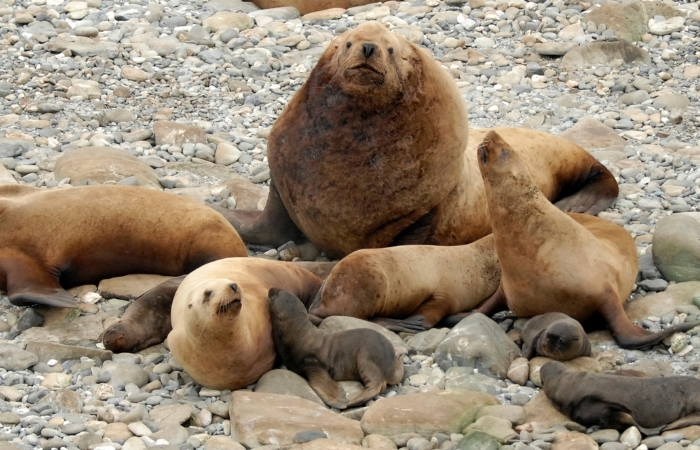 Alaska Fishermen Sentenced For Killing Endangered Sea Lions
