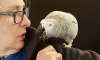 Parrot Amazon Alexa