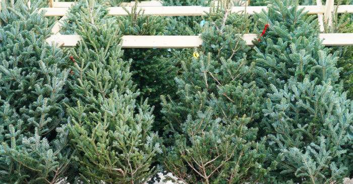 A Grinch Stole Thousands of Dollars Worth of Christmas Trees