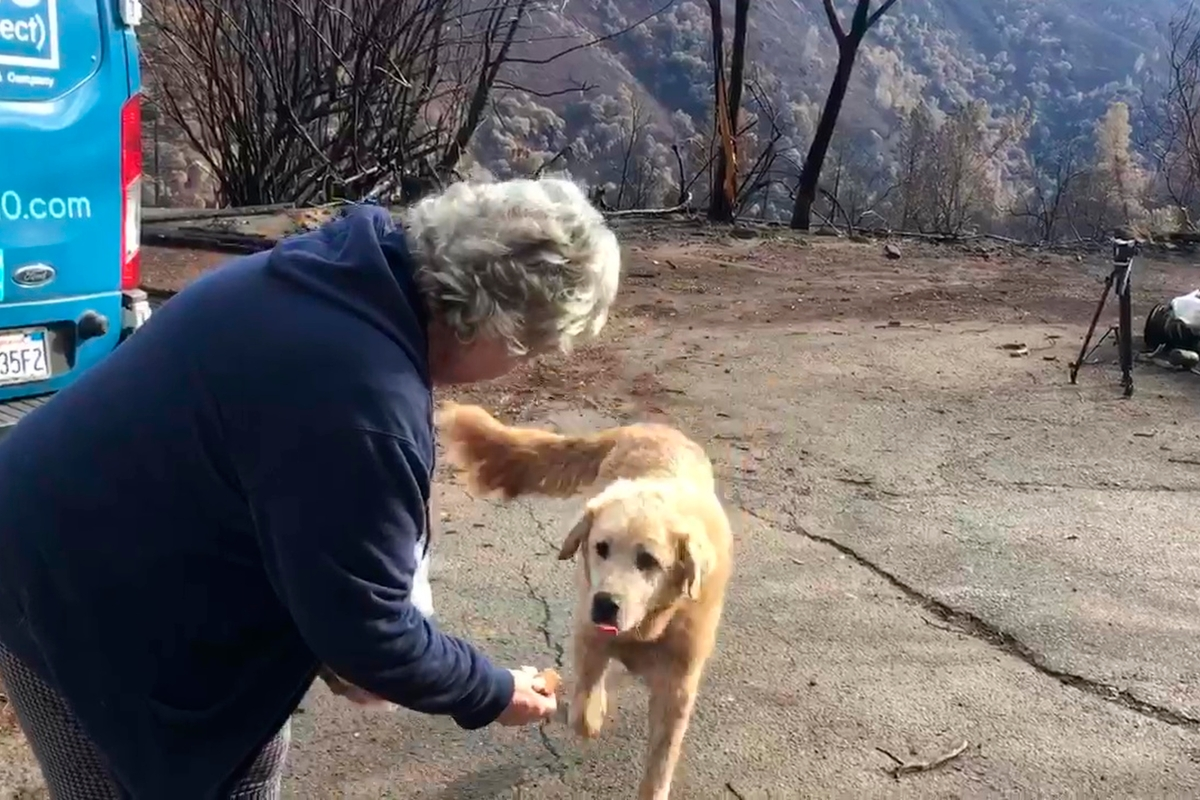 Dog Guarded Wildfire Home for a Month Before Owners Came Home