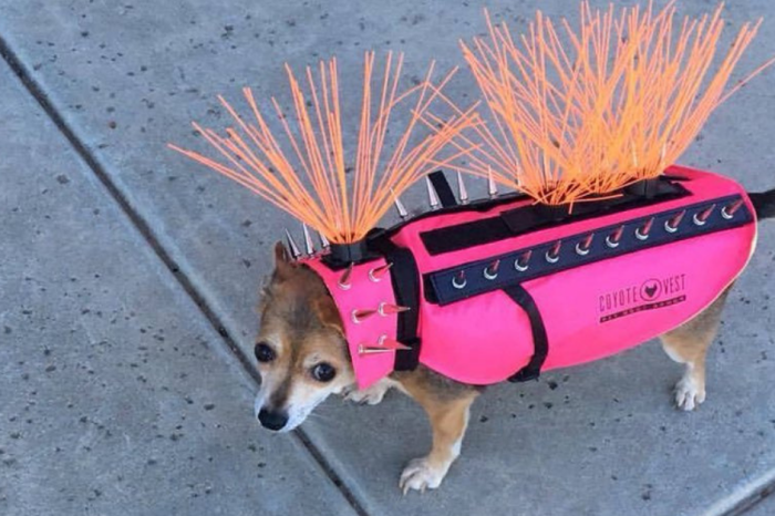 This Crazy Looking Body Armor Protects Small Dogs from Coyotes and Other Attacks