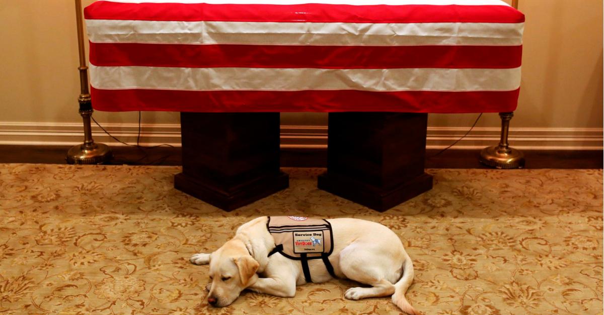 George Bush Service Dog
