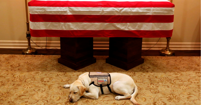 George H.W. Bush's Service Dog Sully Spends a Final Few Moments with His Master