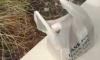 Japanese Food Uber Eats Dirty Underwear