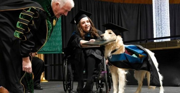 Service Dog Graduates With Master's Degree Alongside Owner
