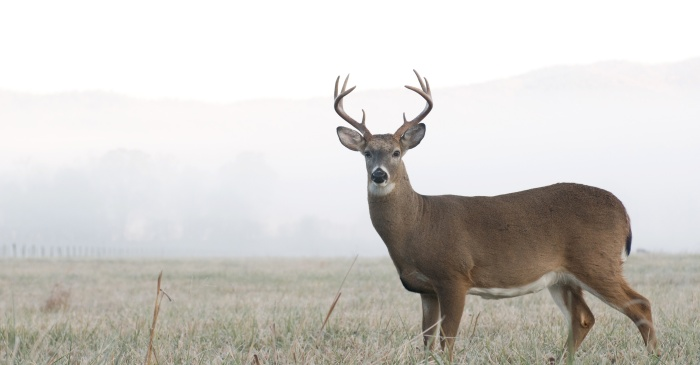 101-Year-Old Woman Kills Two Deer With Only One Shot