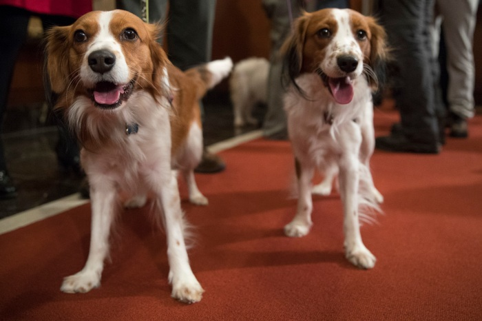 The Westminster Dog Show is Adding Two New Breeds to the Competition