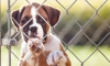New Bill Would Make Animal Cruelty A Federal Felony Nationwide