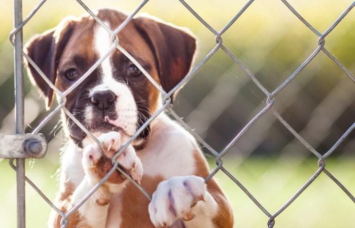 President Trump Signs Bill Making Animal Cruelty A Federal Felony
