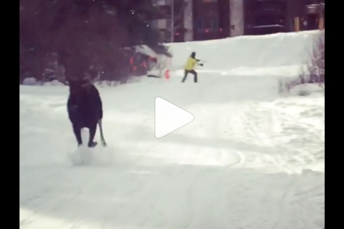 Moose Chases Down Skiers At Ski Resort