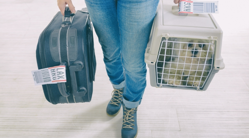 United Arlines Bans Emotional Support Animals on Flights