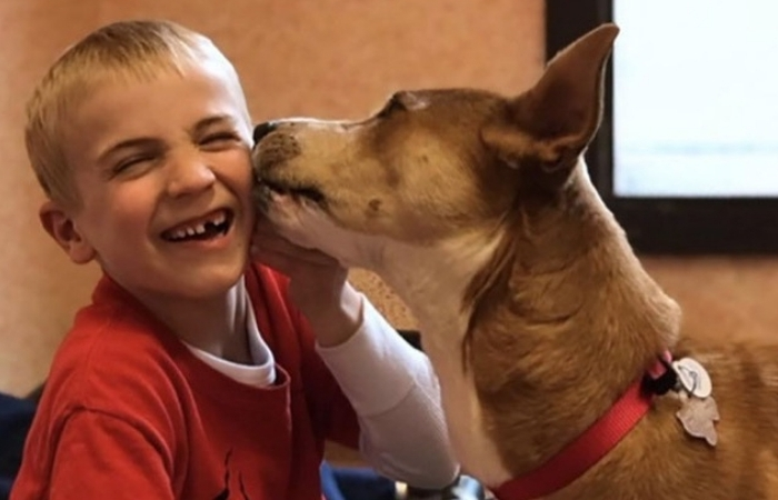 7-Year-Old Rescues More Than 1,300 Dogs From Kill Shelters