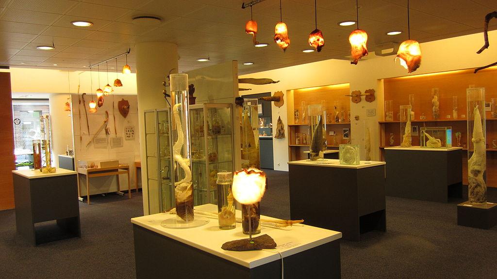 Icelandic Penis museum