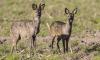 Chronic Wasting Disease Zombie Deer