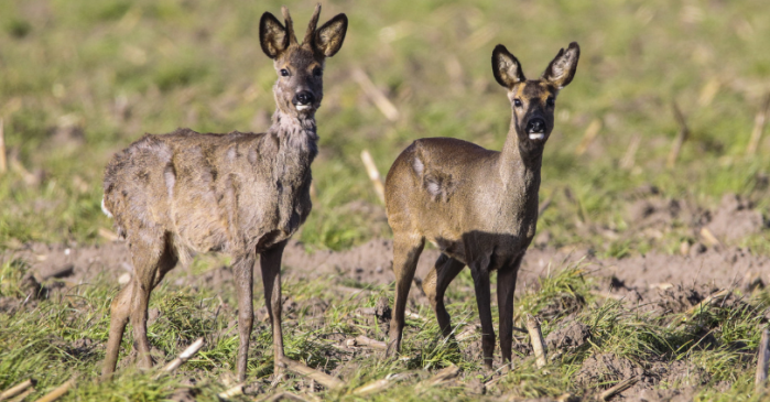 A Disease That Turns Deer into Zombies (Seriously) is Spreading Across the United States