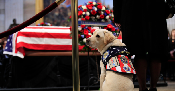 Sully, President Bush's Former Service Dog, Has a New Mission