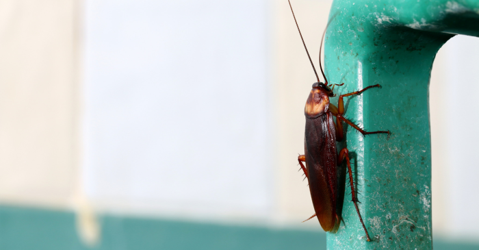 This Zoo Will Name A Cockroach After Your Ex for Valentine's Day Because They Deserve It
