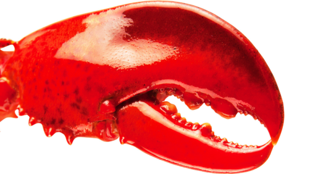 Costco is Selling These Humongous Mutant Lobster Claws