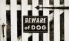 Dogs Kill Florida Toddler