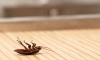 Man Accidentally Shoots Himself While Trying To Kill A Cockroach