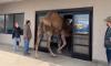 Camel PetSmart