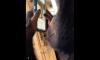Chimp using Instagram