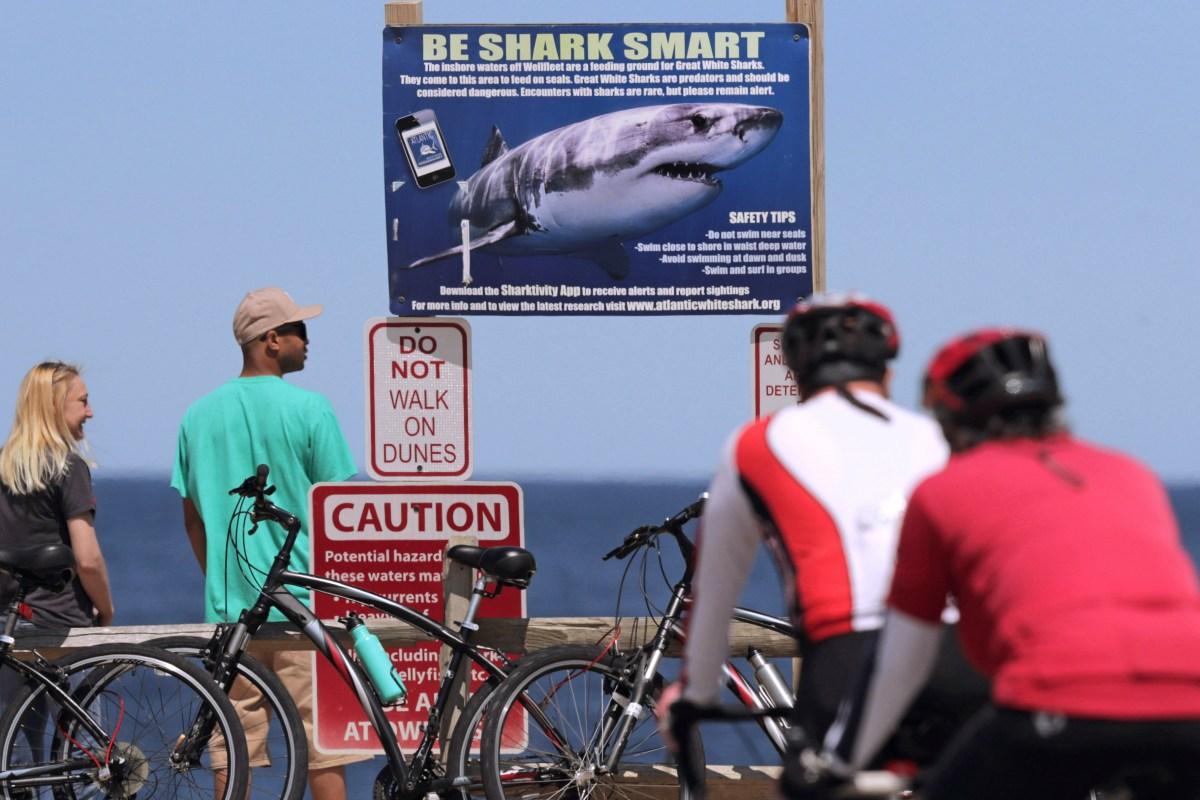 Cape Cod Shark Attacks