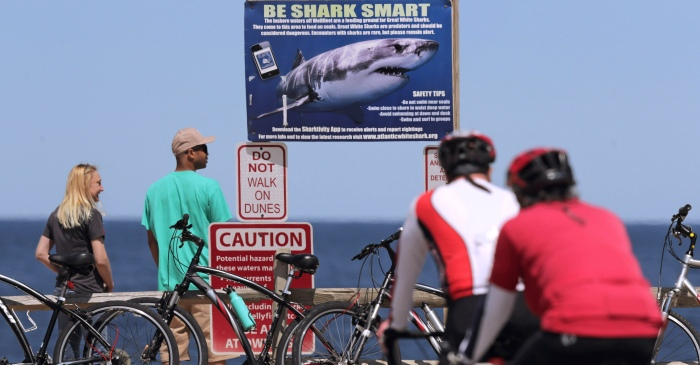 9-Year-Old Girl Bitten by Shark Swimming in Florida