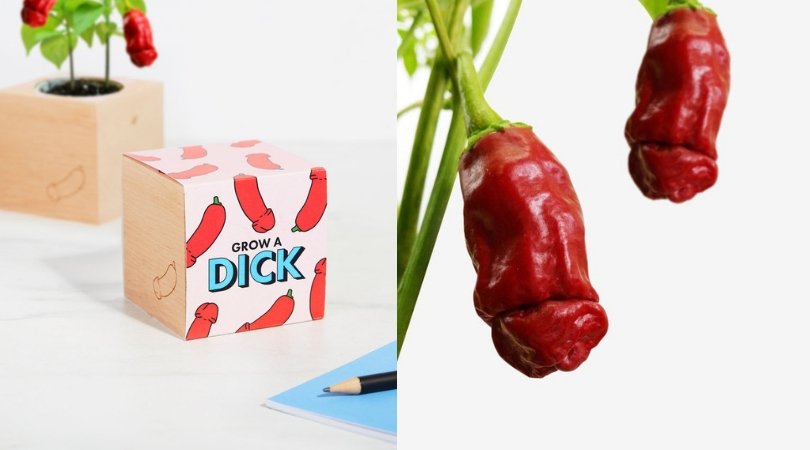 This 'Grow a Dick' Chili Plant Will Spice Up Your Kitchen In More Than One Way