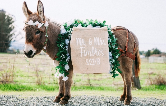 People Are Apparently Using Miniature Beer Donkeys To Serve Drinks At Their Wedding