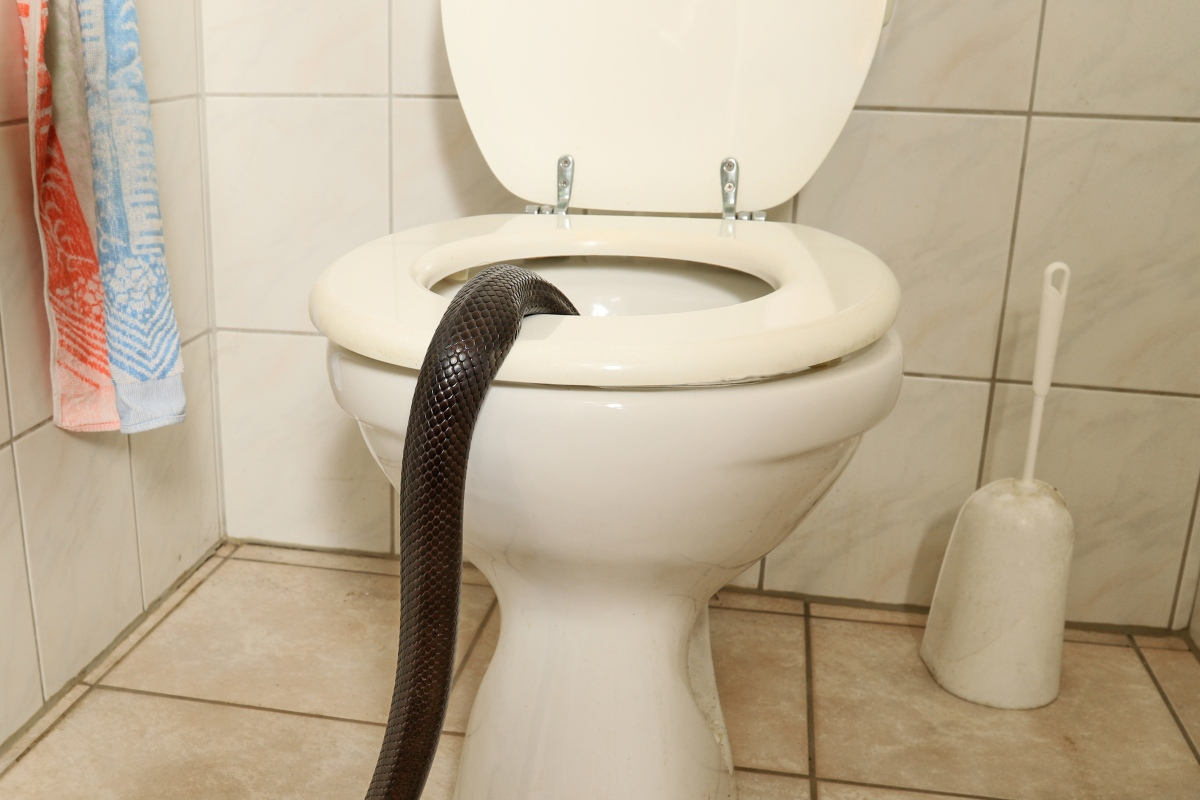 Toilet Snake Florida Man