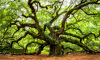 Angel Oak Park South Carolina