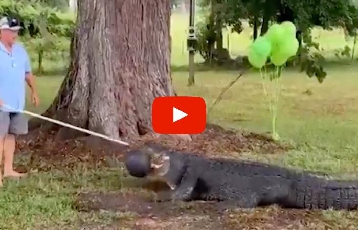 """Pet Alligator"" Helps Florida Family Reveal Their Baby's Gender"