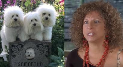 Barbra Steisand Cloned Dogs
